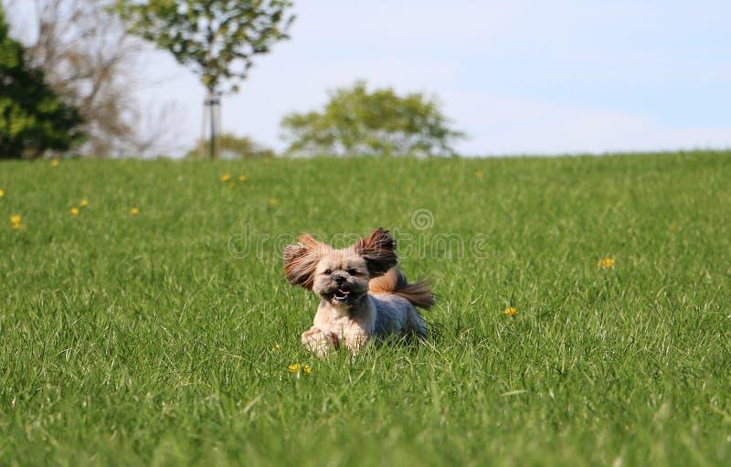 Funny running small dog in the garden stock photos
