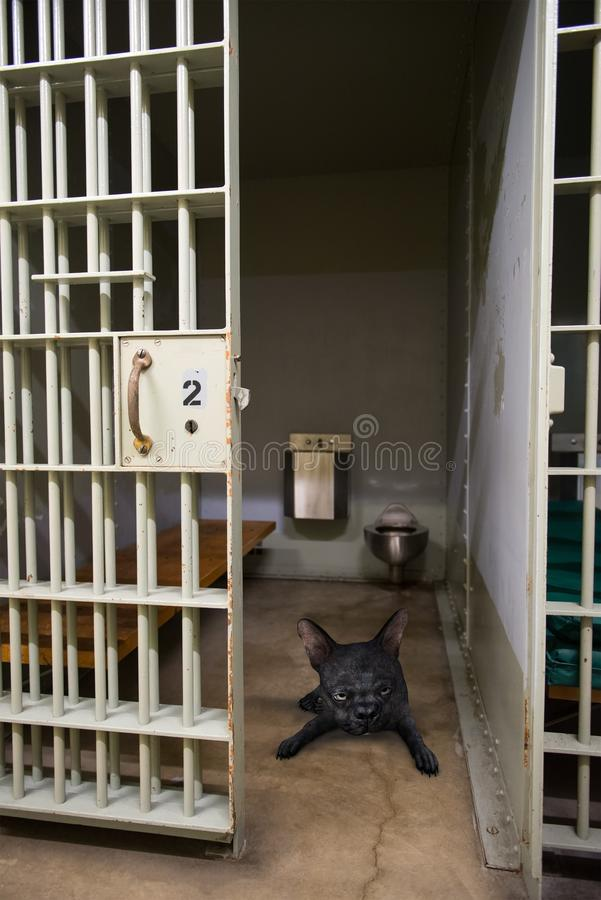 Funny Sad Dog, Jail, Prison, lonely royalty free stock photo