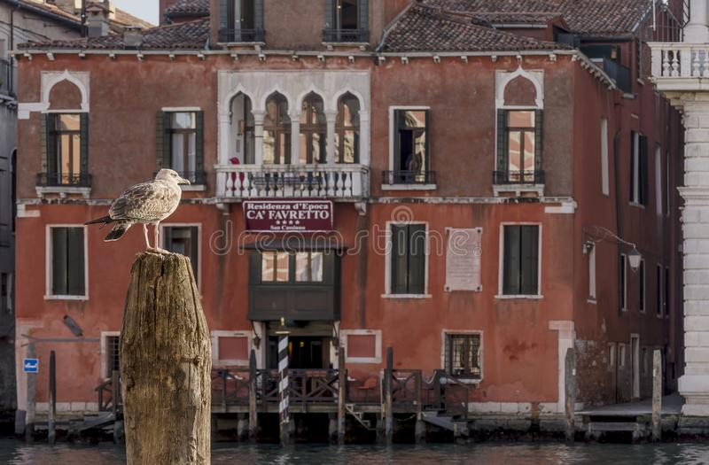 Funny seagull watching the Grand Canal in Venice, Italy stock photo