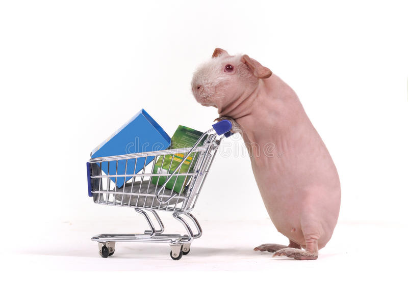 Funny Shopper Royalty Free Stock Image