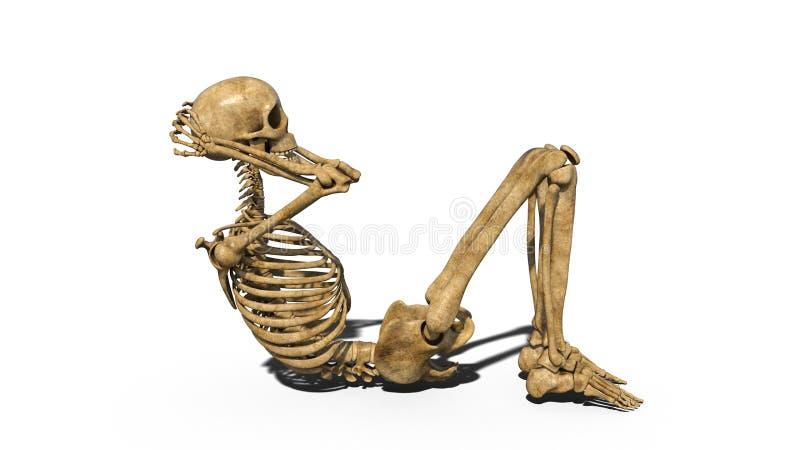 Funny skeleton doing curl ups, human skeleton exercising abs muscles on white background, 3D render royalty free illustration