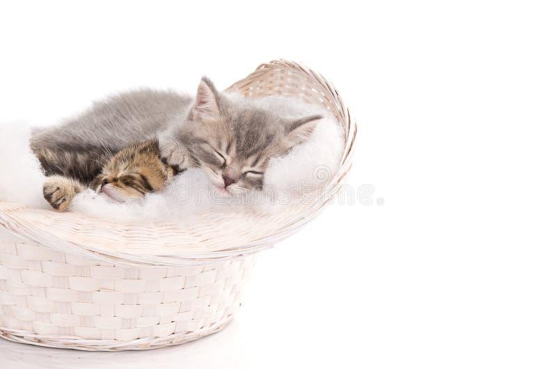 Funny sleeping kittens in basket stock photos