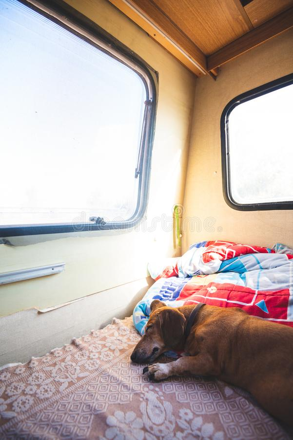 Funny small dog is sleeping sweetly on the couch in the trailer stock image