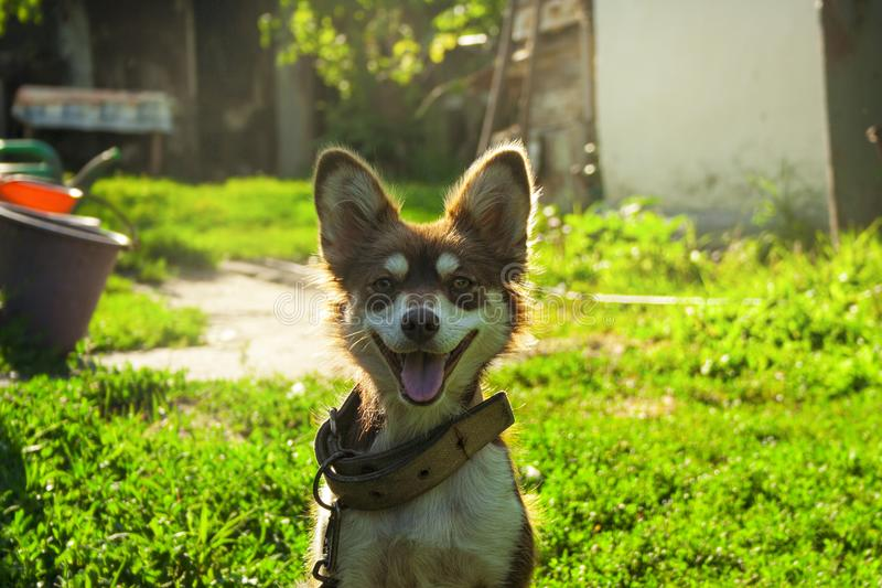 Funny smiling dog in the courtyard. Sunshine day. Colorful photo stock photo