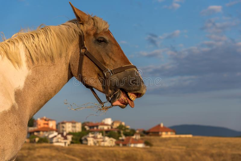 Funny smiling horse portrait royalty free stock image