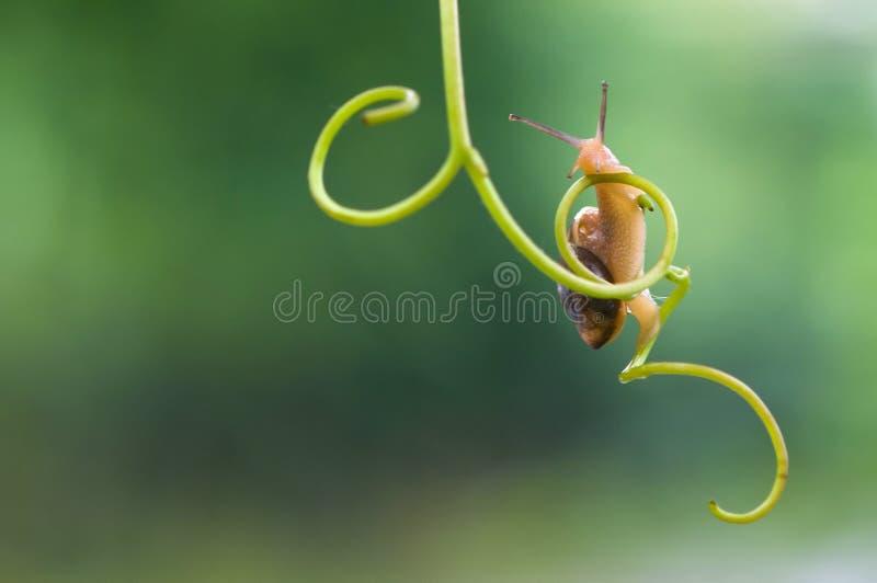 Funny snail stock photography