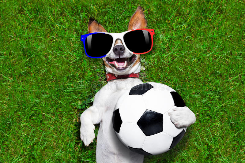 Funny soccer dog royalty free stock image