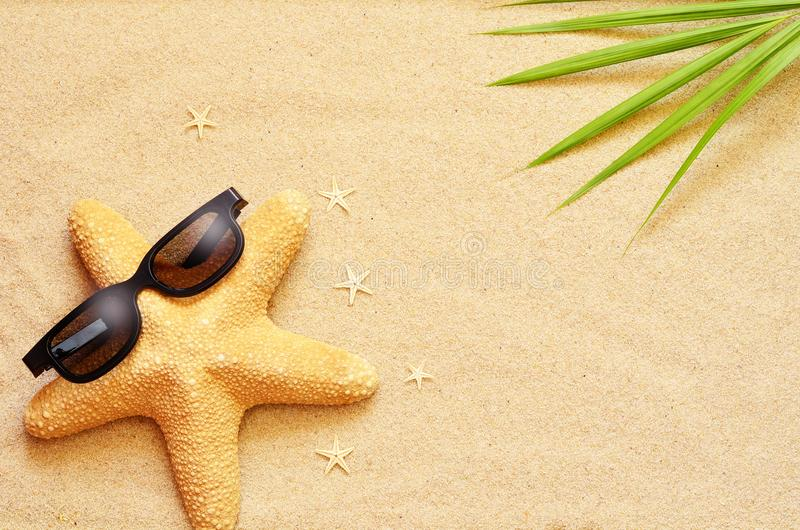 Funny starfish on the summer beach with sand stock image