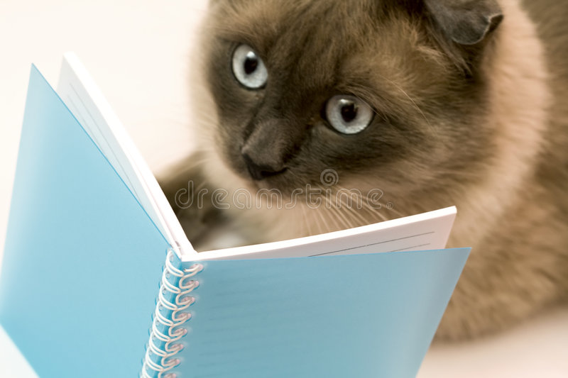 Funny surprised cat reading blank notebook royalty free stock image