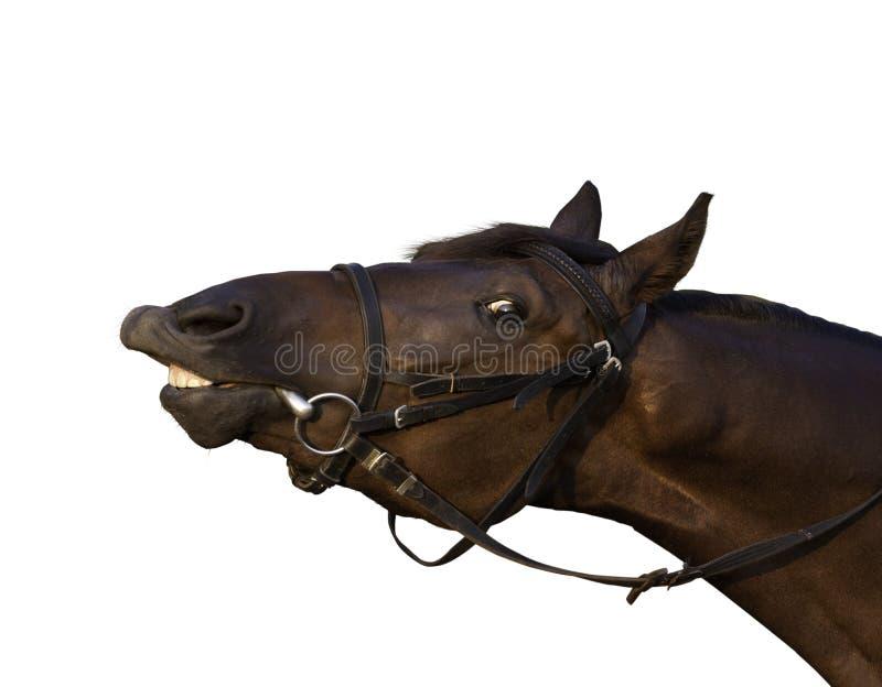 Funny tan horse stock photos