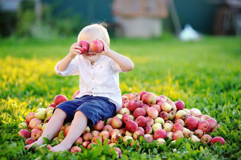 Funny toddler boy sitting on heap of apples and eating ripe apple in domestic garden stock images