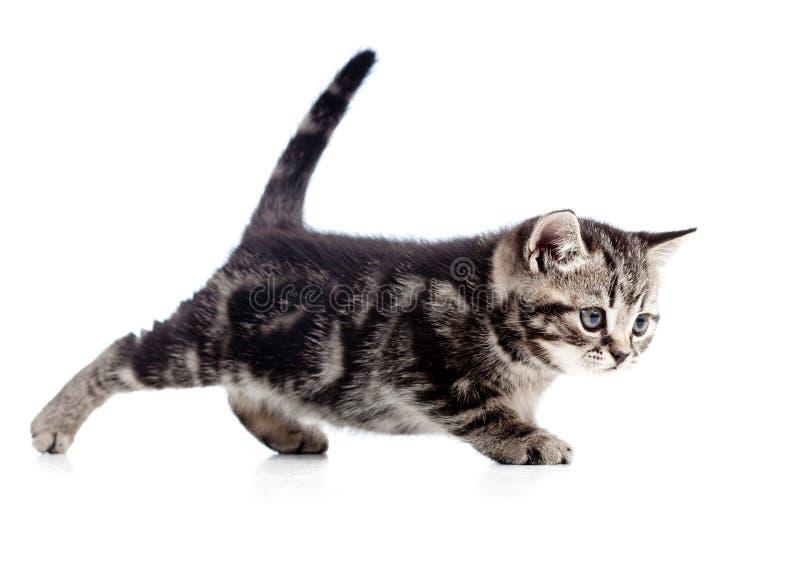 Download Funny Walking Black Cat Kitten On White Stock Photos - Image: 26590683