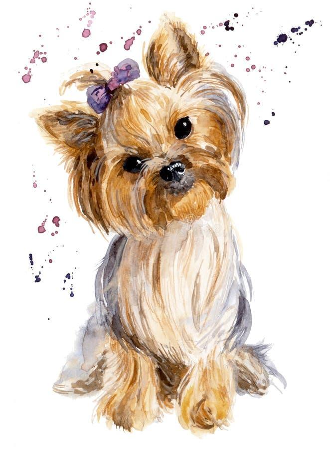 Funny watercolor dog illustration. Yorkshire`s portrait stock photos