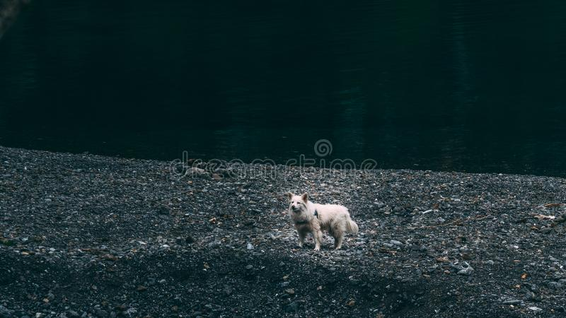 Funny white dog standing up strong stock photos
