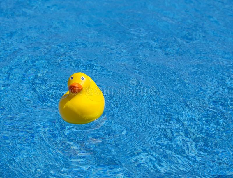 Yellow rubber duck in a pool stock photography