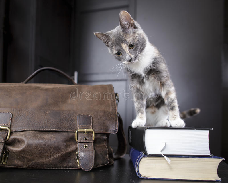 Funny young cat sitting on a pile of thick scientific books stock image