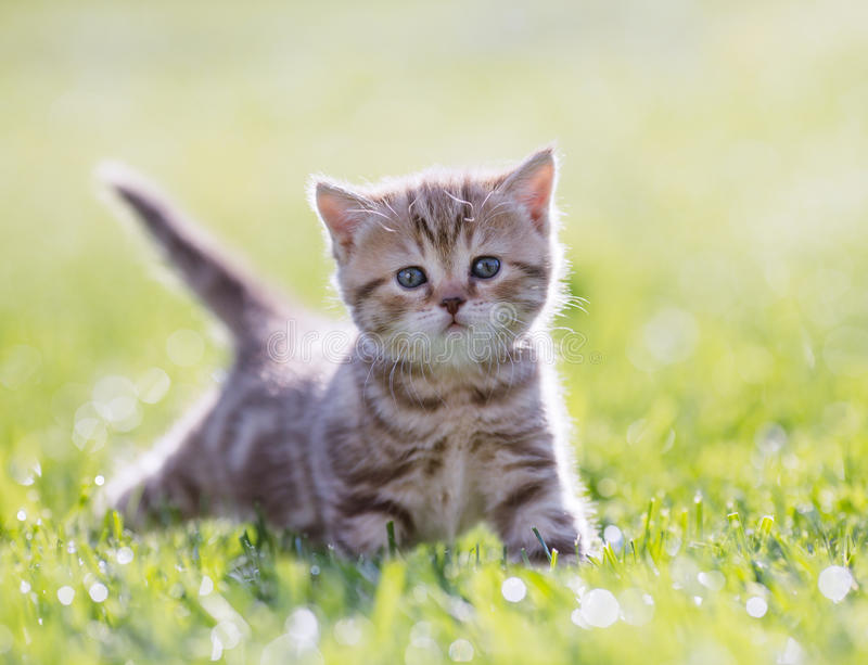 Funny young cat standing in green grass stock photo
