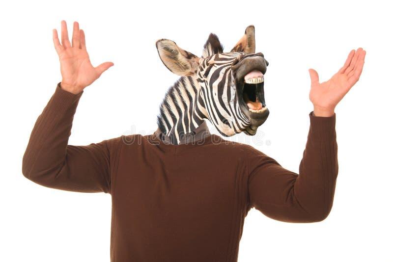 Funny Zebra Man Concept stock images