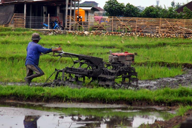 Funzionamento asiatico dell'agricoltore Aratura delle risaie Knee-deep nel fango Lavoro sporco duro sui terrazzi del riso immagine stock