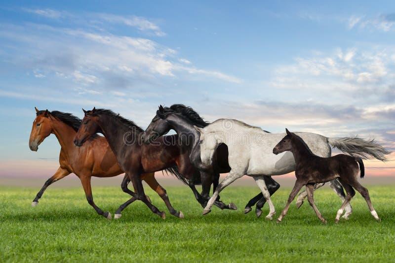 Funzionamento dei cavalli fotografie stock