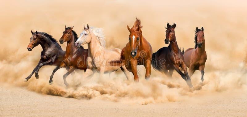 Funzionamento dei cavalli fotografia stock libera da diritti