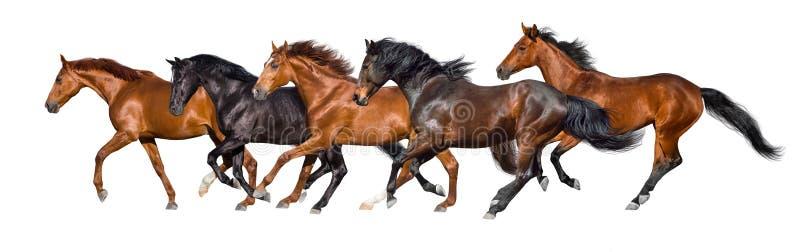 Funzionamento dei cavalli isolato immagini stock