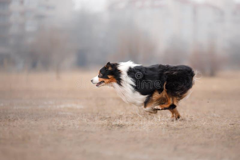 Funzionamento del cane e giocare nel parco fotografia stock