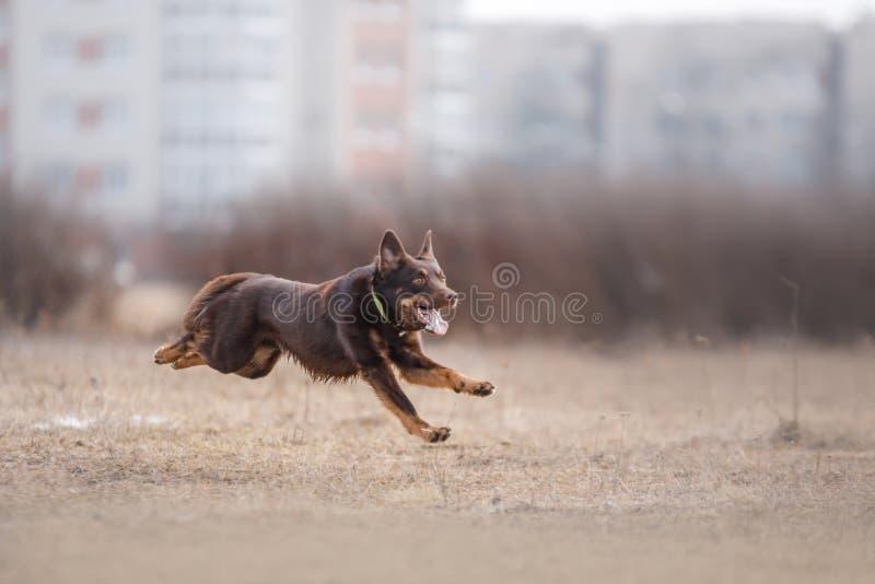 Funzionamento del cane e giocare nel parco immagini stock libere da diritti