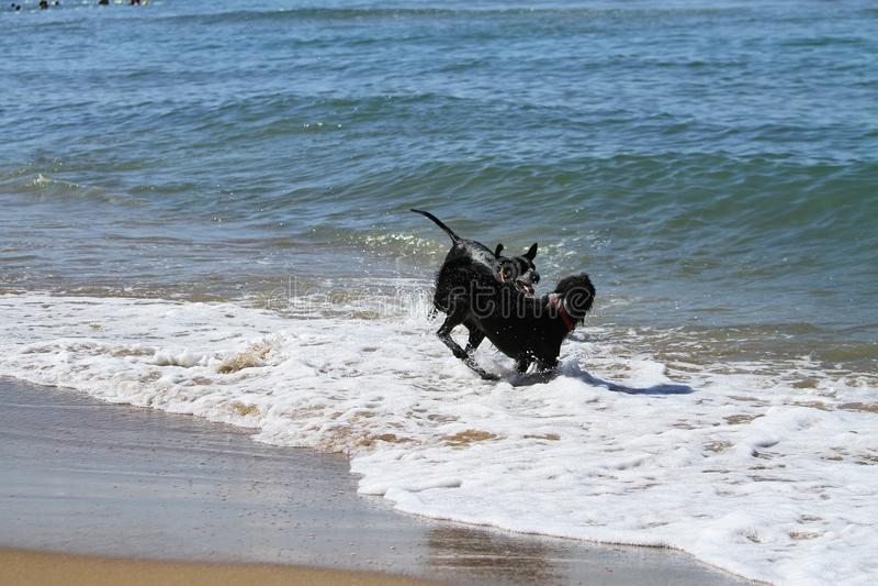Funzionamento del cane nel mare immagine stock libera da diritti