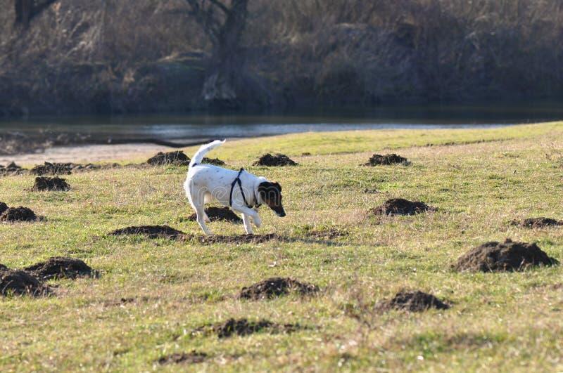 Funzionamento del cane sul campo fotografie stock libere da diritti