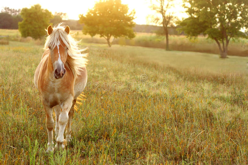Funzionamento del cavallo al tramonto fotografia stock libera da diritti