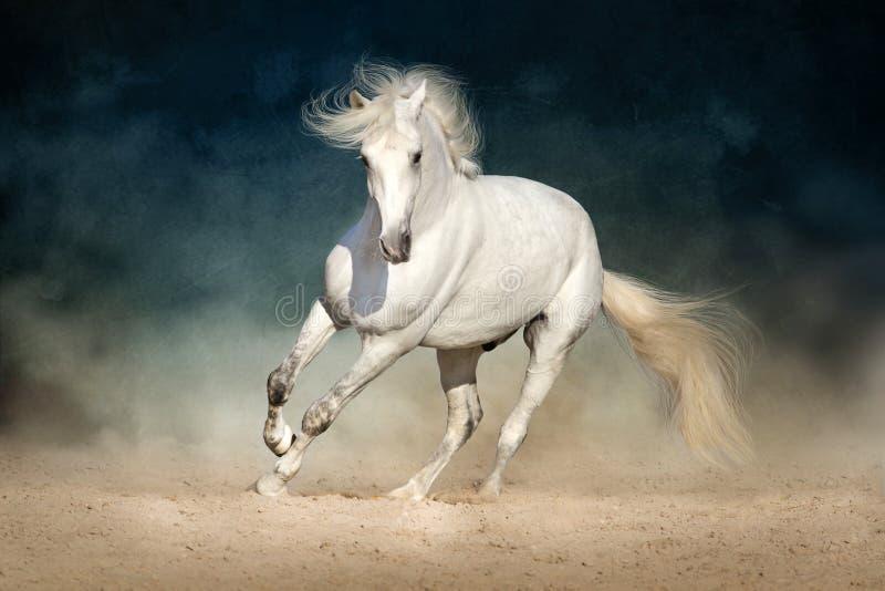 Funzionamento del cavallo bianco fotografie stock