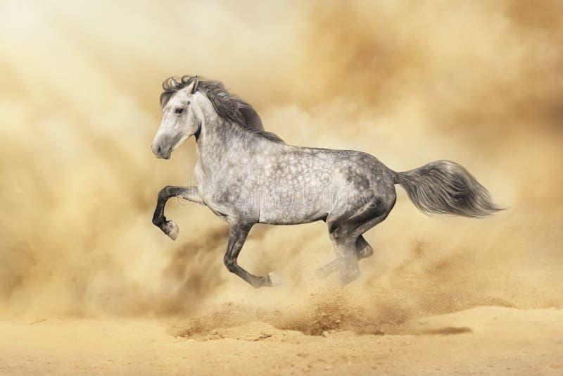 Funzionamento del cavallo bianco in deserto fotografia stock