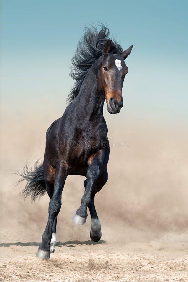 Funzionamento del cavallo di baia fotografia stock libera da diritti