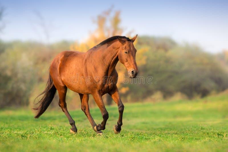 Funzionamento del cavallo libero fotografie stock