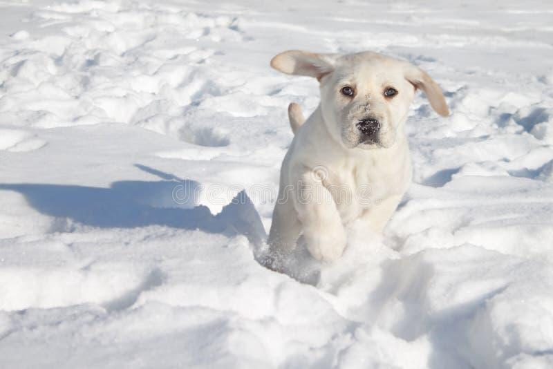 Funzionamento del cucciolo di cane fotografia stock libera da diritti
