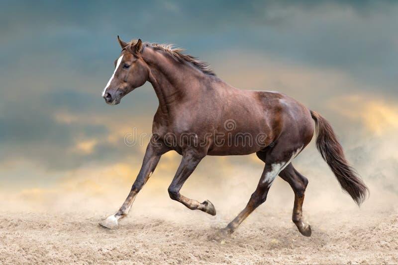 Funzionamento del gregge del cavallo fotografie stock