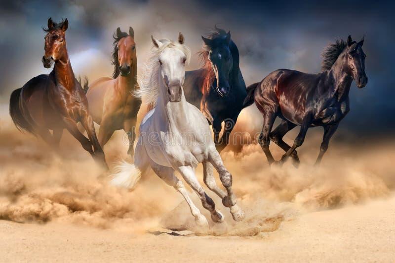 Funzionamento del gregge del cavallo immagini stock libere da diritti