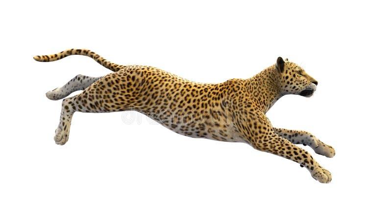 Funzionamento del leopardo, animale selvatico isolato su bianco illustrazione vettoriale