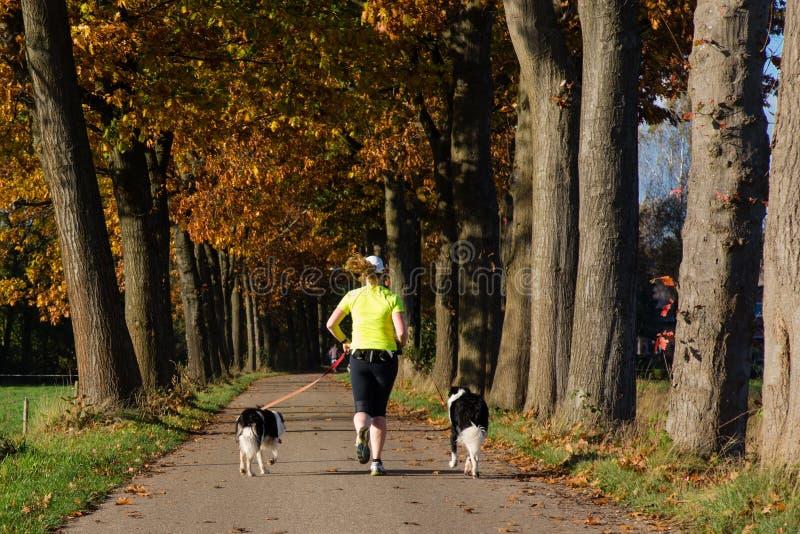 Funzionamento della donna con due cani sulla strada campestre immagini stock libere da diritti