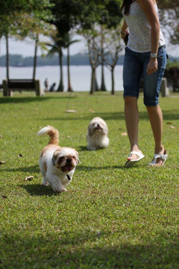 Funzionamento della donna e del cane fotografia stock libera da diritti