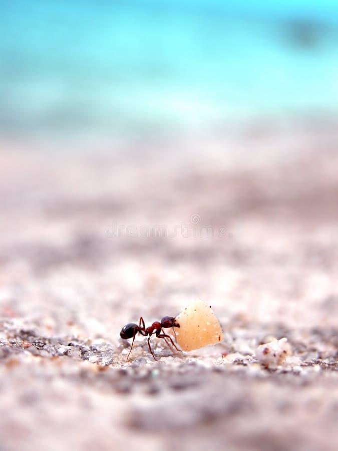 Funzionamento della formica fotografia stock