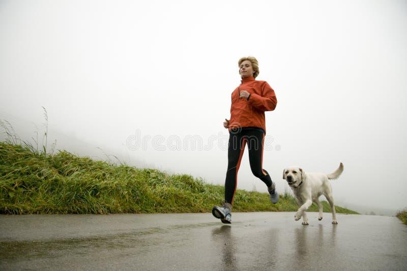 funzionamento della strada del cane fotografia stock libera da diritti