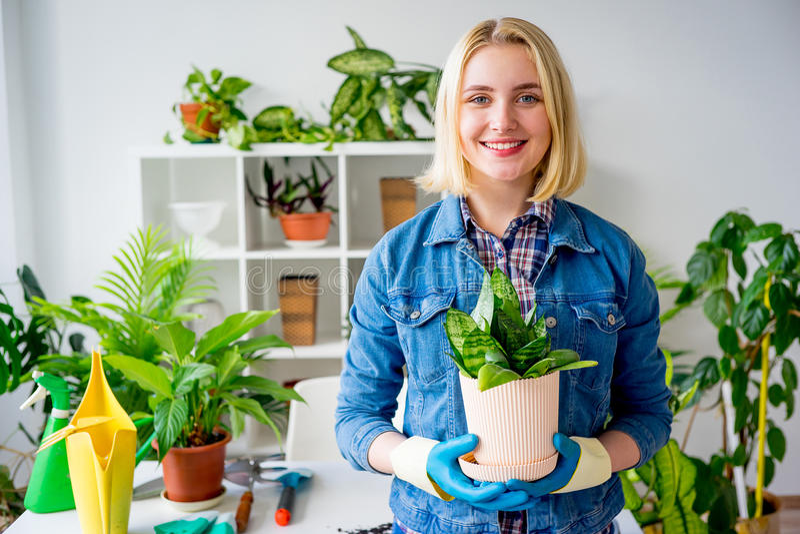 Funzionamento femminile del fiorista immagine stock