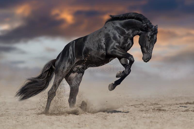 Funzionamento nero dello stallone fotografie stock