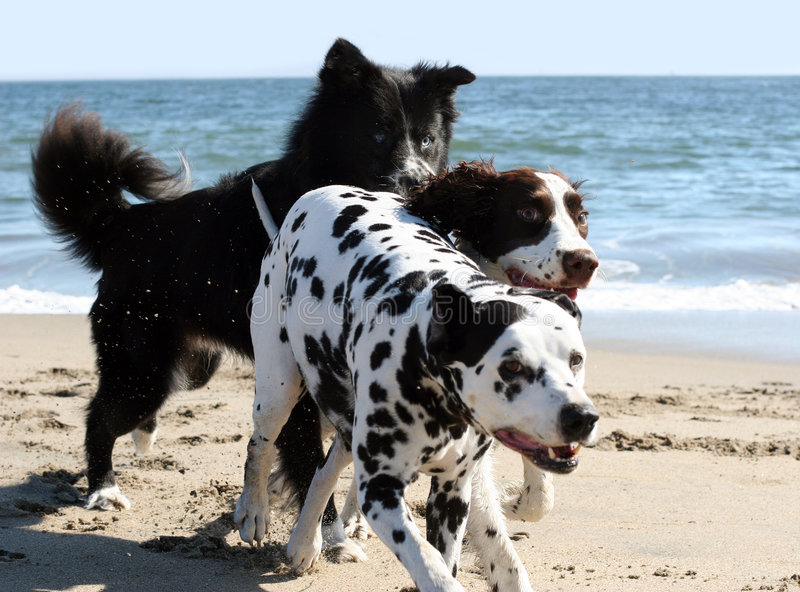funzionare dei 3 cani fotografia stock libera da diritti