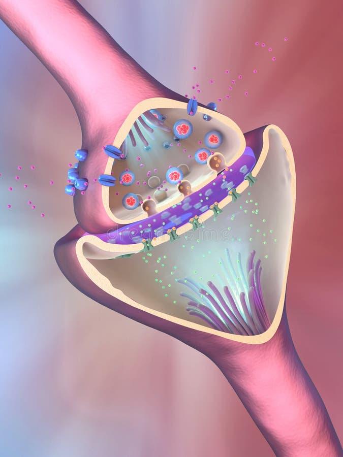 Funzione scientifica di una sinapsi o di un collegamento di un neurone con le cellule nervose illustrazione di stock