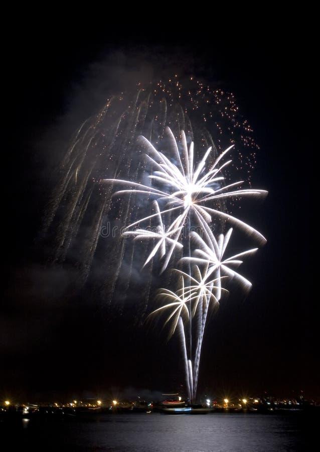 Fuochi d'artificio bianchi delle palme fotografia stock libera da diritti