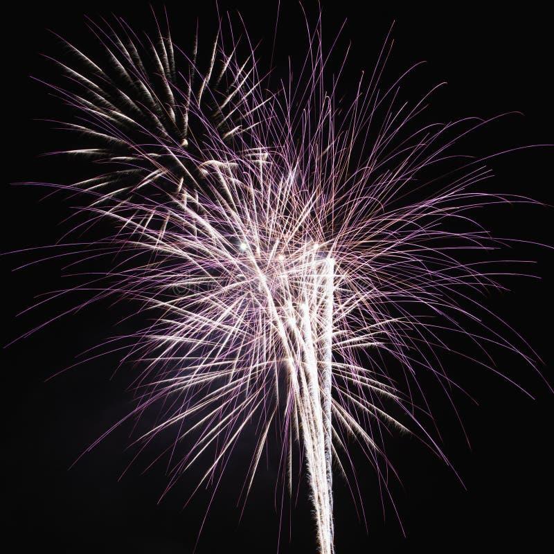 Fuochi d'artificio che esplodono alla notte. immagini stock