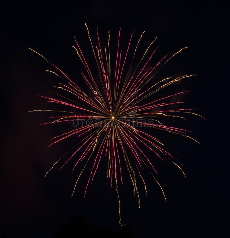 Fuochi d'artificio dell'Rosa-oro fotografie stock